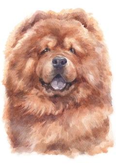 チャウチャウ犬の水彩画