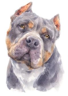 Акварельная живопись собаки питбулл