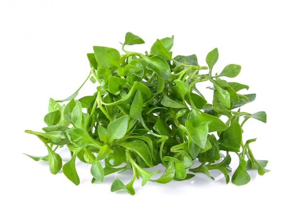 Watercress isolated on white space