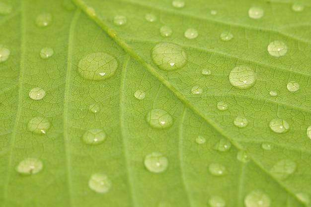 Waterdrops on a leaf