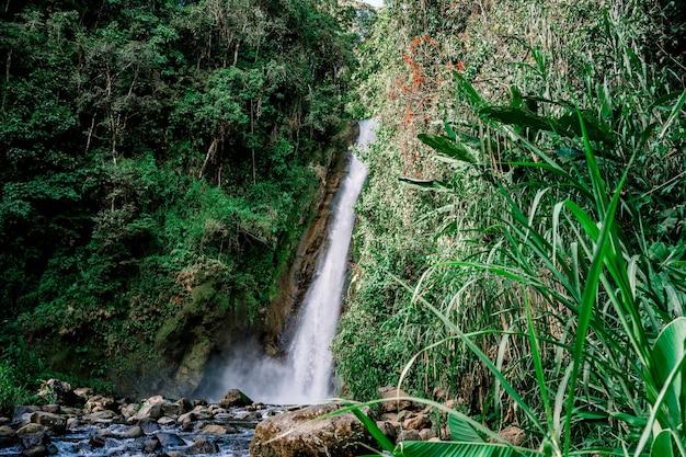 Водопад и река посреди джунглей. турриальба, коста-рика