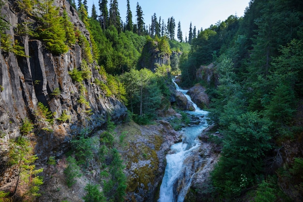 美しい緑の森の滝