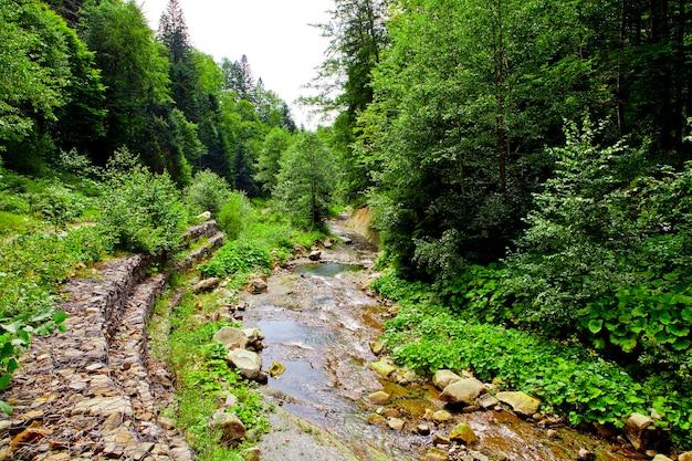 山の森の滝