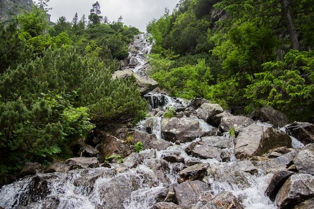 돌 앞에 알프스 산으로 폭포. 흐린 하늘 배경에 녹색 식물으로 덮여 높은 바위. 유럽 알프스에서 폭포입니다. 유럽.