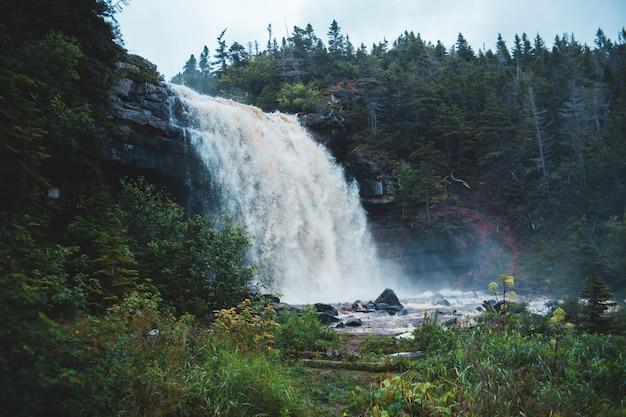 昼間の緑の葉の木の間の滝