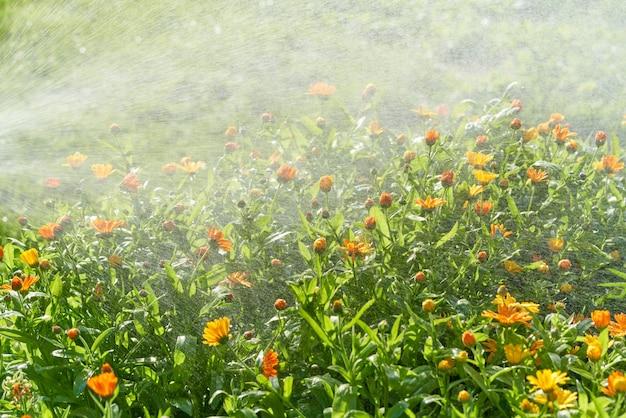 Полив дождем цветов и растений из шланга в домашнем саду в солнечный день