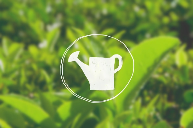 Watering can growth green tea herb bush agriculture concept