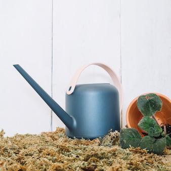 植物の鉢の近くに水を注ぐことができます