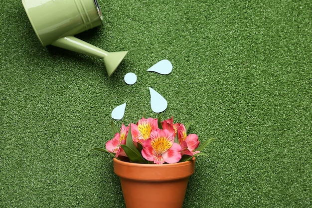 Watering can and pot with blooming plant on color surface