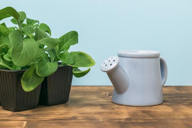木製のテーブルの上のプラスチック容器に花の苗とじょうろ