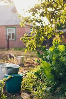 Лейки и ведра в саду
