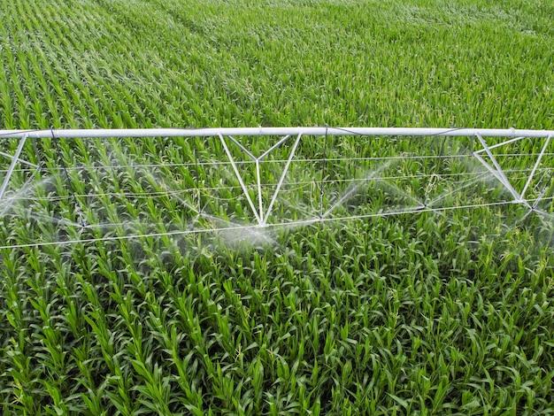 Watering in a corn field