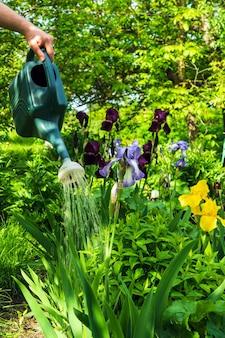 暑い日の夏に庭の花に水をまく