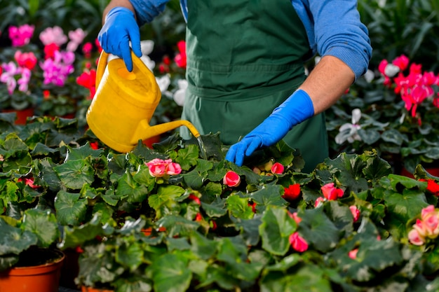 温室で花に水をまく