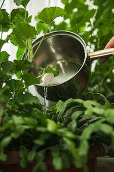 농장 지대에서 녹색 식물을 급수