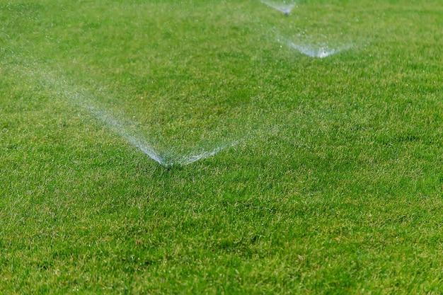 Полив газонной травы водой. природа.