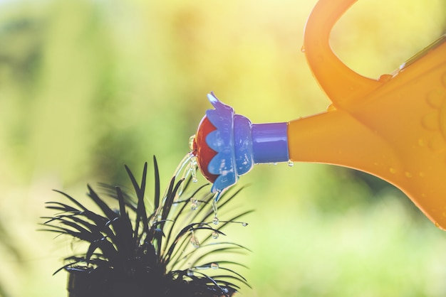 Watering plant with colorful watering can on pot in the garden