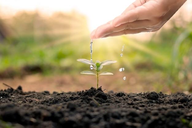 양질의 토양에서 자연적으로 자라는 나무, 나무 심기의 개념, 품질 및 지속 가능한 산림 복원을 포함하여 식물에 손으로 물주기.