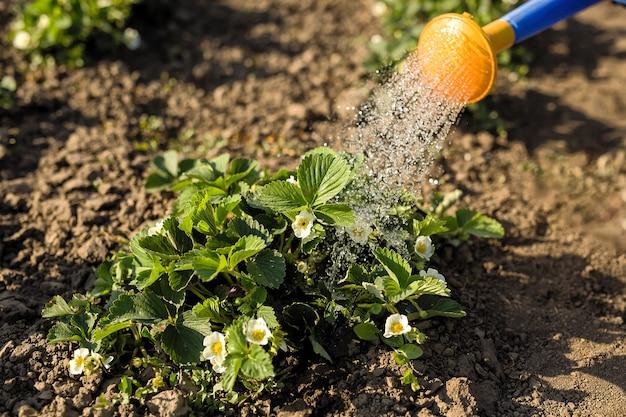 水まき缶から植物に水をまく