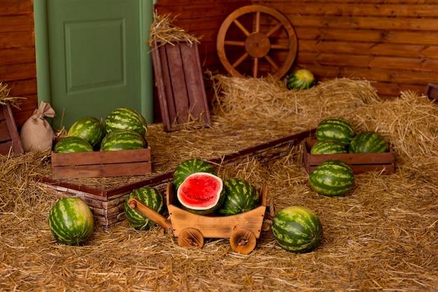 田舎の干し草の中のカートに入れられたスイカ。スイカを収穫する夏。