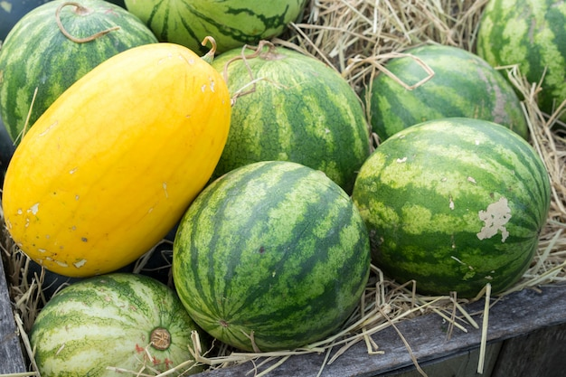 Watermelons on straw in wooden crate. organic orchard.