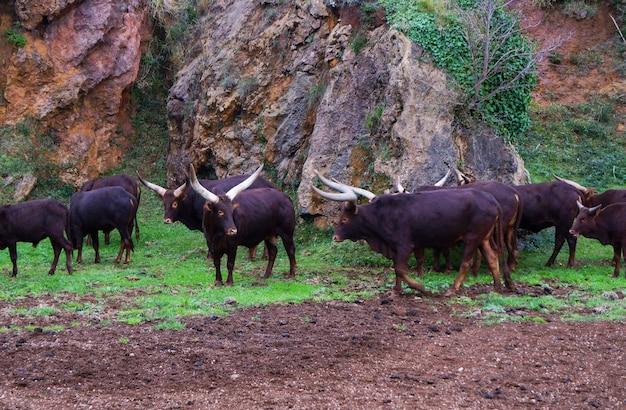 スペイン、カンタブリア州、カバルセノ自然公園のワトゥシ