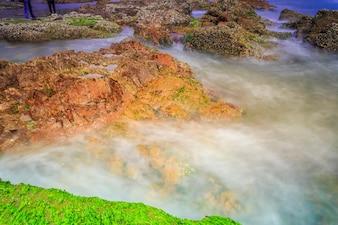 Wave panorama water trees travel ocean