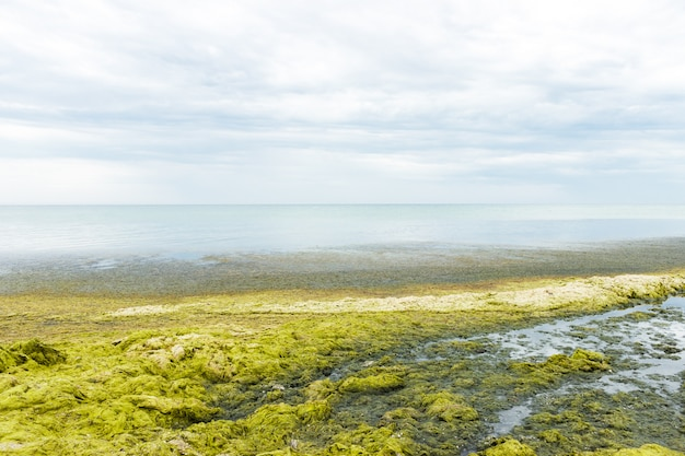 Waves of sea water throw green algae on the beach on a rainy day.