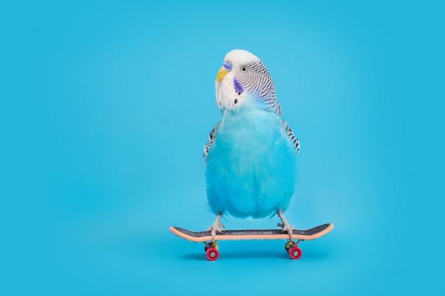 スケートボード上の波状のオウム