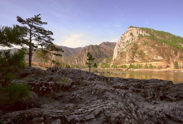 Волнистые скалы на берегу горной реки сосны на скалах высокая гора