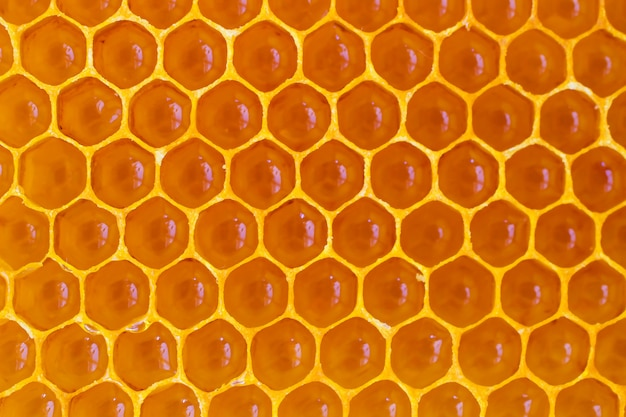 Wax yellow honeycomb close up.