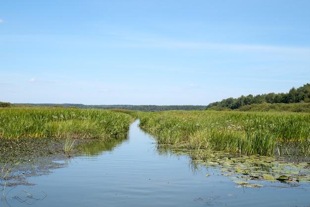 Путь через болото