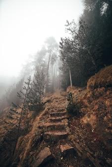 森の頂点への道