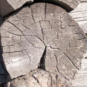 風化し、ひびの入った木の丸太