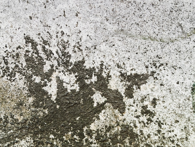 Weathered concrete wall texture with black lichen