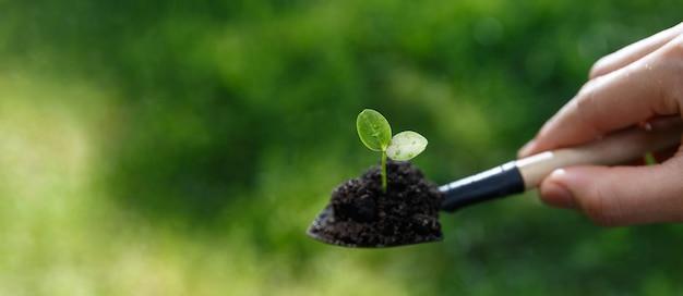 男の手のウェブバナーは、新しい場所に移動するための植物の小さな種をシャベルで掘り、新しい生活と農業の概念の始まり