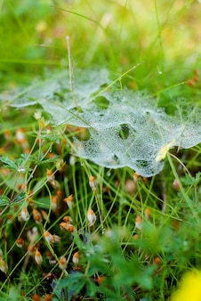 The web on the grass, covered with drops of dew