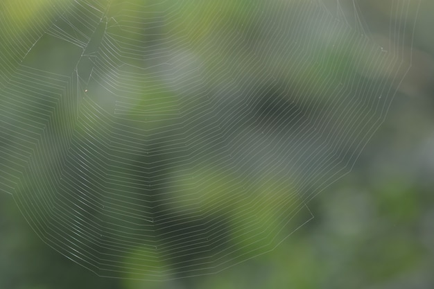 Web lines texture background