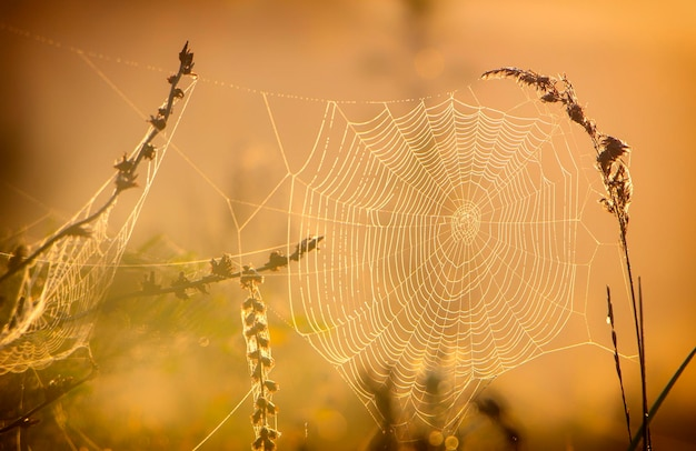 Web with dew drops on a blade of grass on a fog warm background