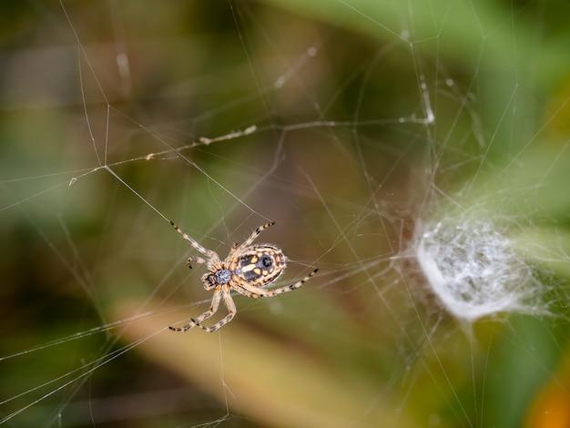 Webのクモ。