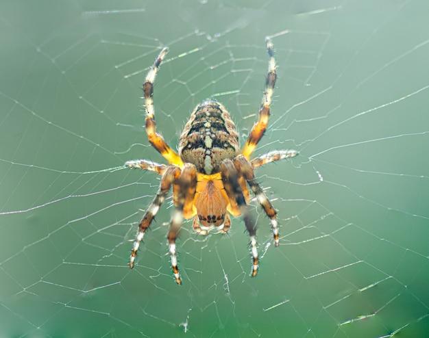 Webの庭のクモ