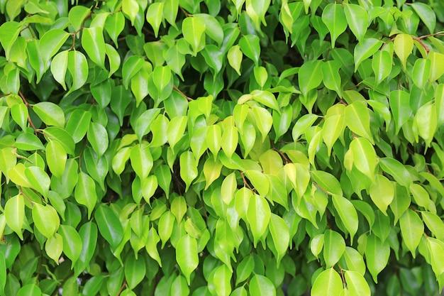 きれいなパターンを持つ公園で背景をぼかした写真の緑の木の葉。クローズアップの自然は、webデザインや壁紙で使用するためのフィールドに残します。
