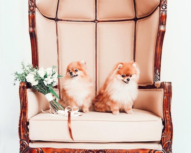 結婚式の花束と玉座に座っているかわいい犬のペア。