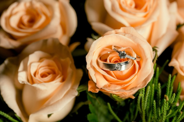 Wedding couple rings placed on orange roses