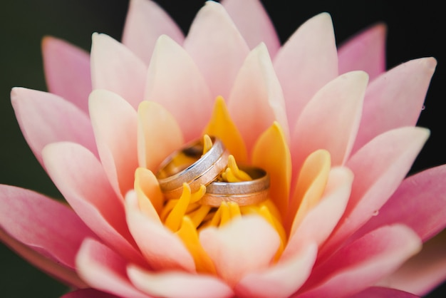 Wedding day. wedding rings on a pink water lily. wedding rings lying on top of the pink lotus.
