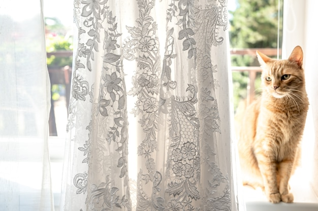 Свадебное платье висит на оконных карнизах, кошка