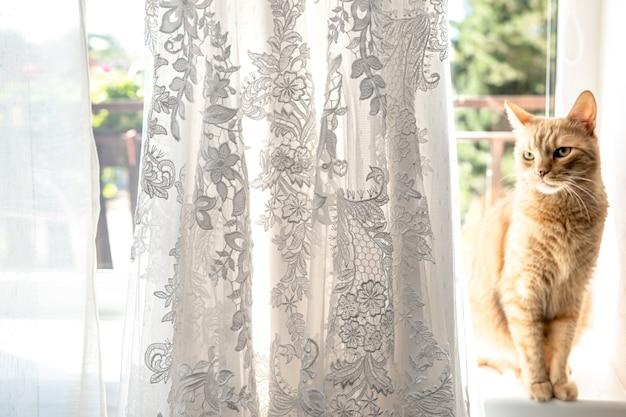 Wedding dress hanging on window cornices, cat
