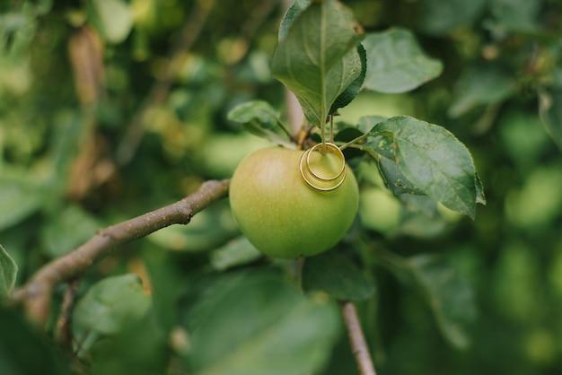 Обручальные золотые кольца жениха и невесты висят на ветке возле зеленого яблока