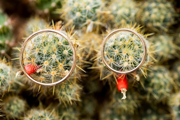 Wedding gold rings on cactus with orange fruits. love, marriage concept. overhead shot.