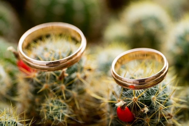 Wedding gold rings on cactus with orange fruits. love, marriage concept. side view.
